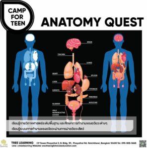 Anatomy Quest11112020